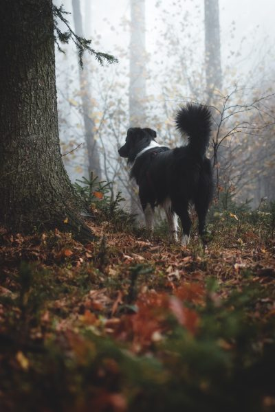Dog Walks in Cornwall