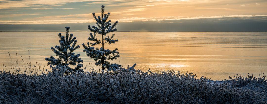 Tamar Valley in Winter